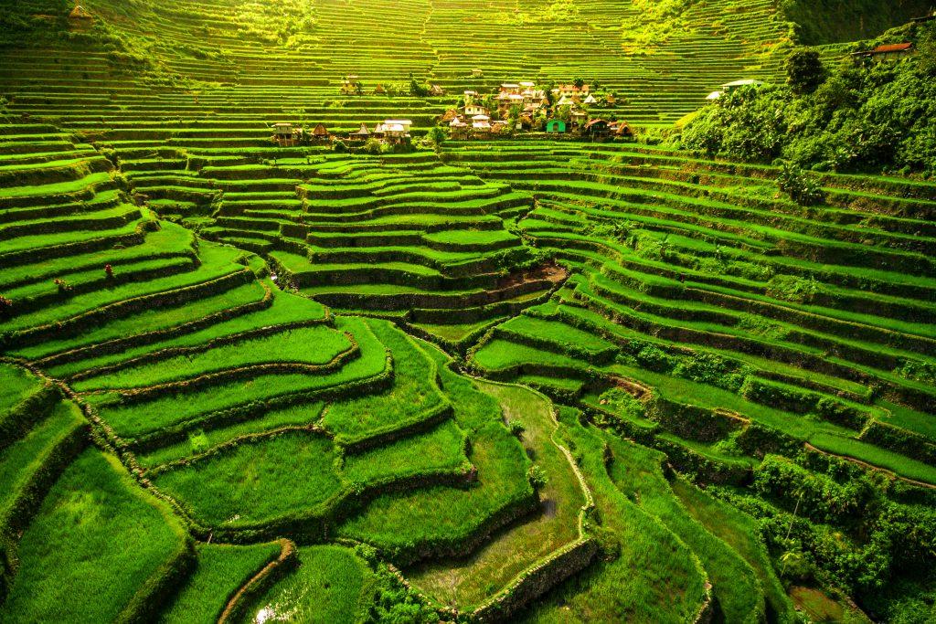 Luzon Adası, Pirinç Tarlaları, Filipinler