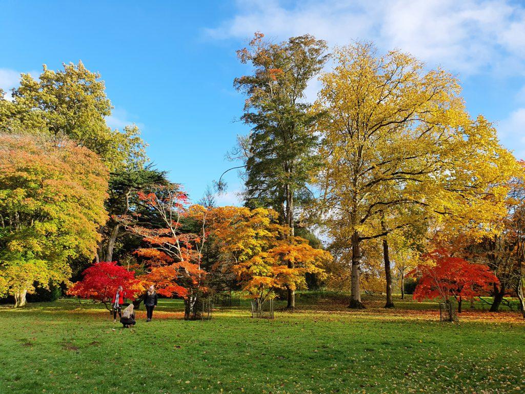 Westonbirt The National Arboretum (İngiltere)
