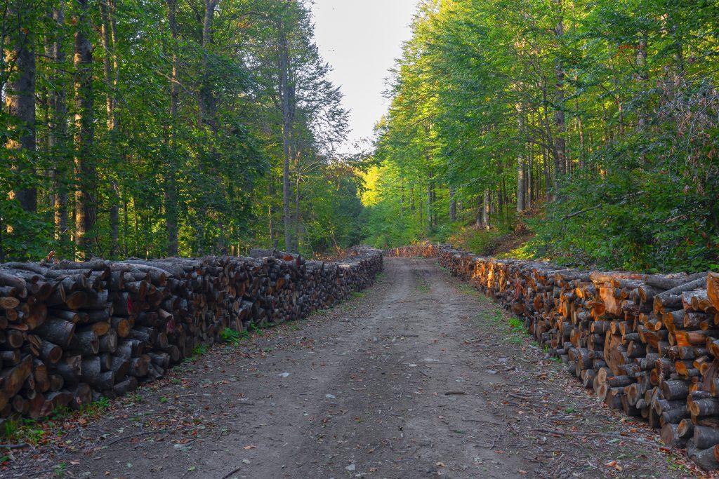 Domaniç Ormanları, Kütahya