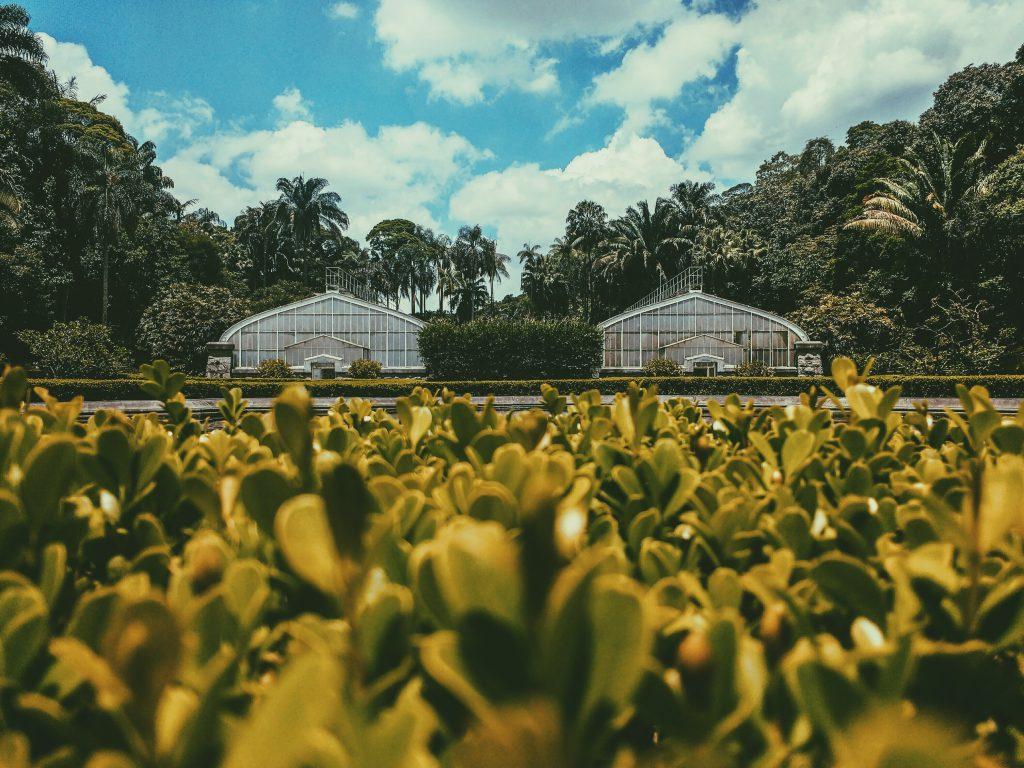 Sao Paulo Botanik Bahçesi (Jardim Botânico de São Paulo), Brezilya