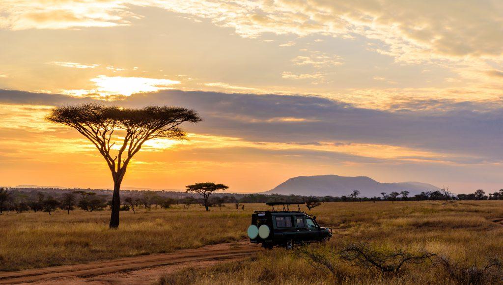 Kruger Ulusal Parkı – Güney Afrika