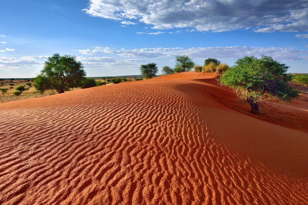 Kalahari Çölü
